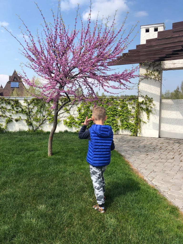 Tree_on_Terrace_02